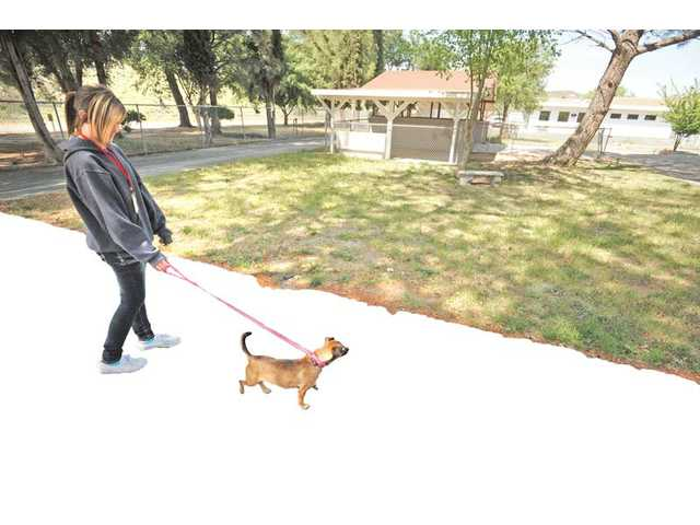 The yard at the Castaic Animal Shelter in Castaic is one of the areas that need renovation