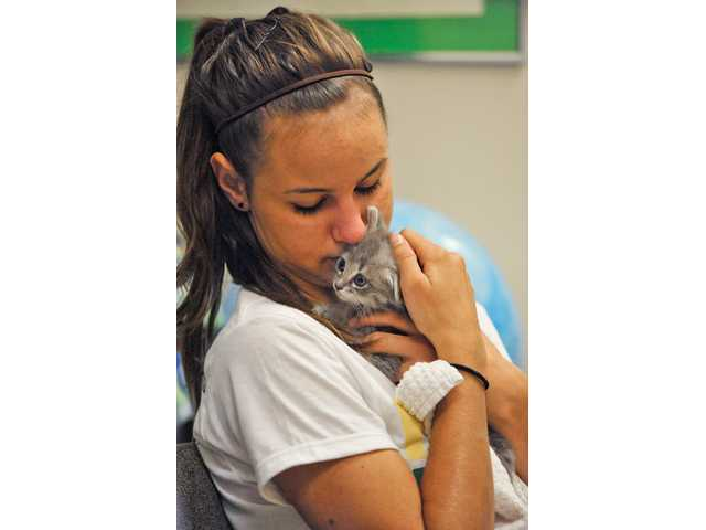 Rebeca Pieropan, 17, visits with a feral kitten at the Castaic Animal Shelter on Saturday.