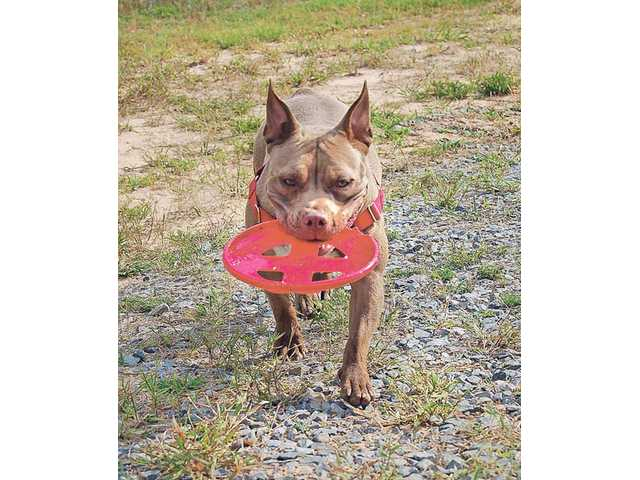 ince playing fetch is one of Kara's favorite activities, Michelle Sathe took advantage of the uncrowded campground at the Black Bayou Recreation Area, in Louisiana, to indulge her four-legged friend.
