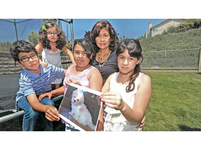 "Members of the Afetian Family, from left, Alex, 8, Olivia, 5, Cassandra, 12, mother Kathryn and Christina, 10, hold a photo of their 1-year-old ""Mal-Shi"" dog Bella, who they believe was eaten by a coyote."