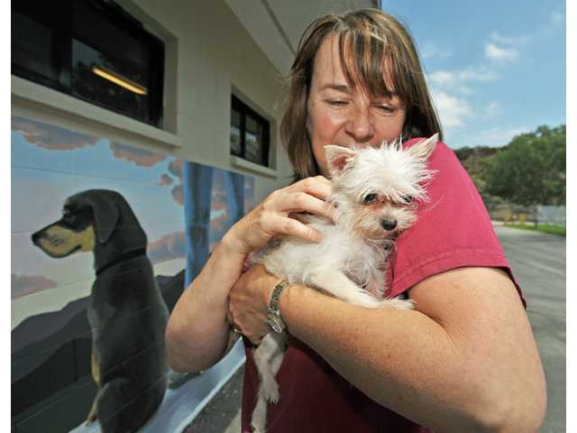 Clare Storey, a volunteer at the Castaic Animal Shelter, holds a terrier at the Castaic Animal Shelter in Castaic on Saturday. The dog was recently found in a bag on a trail. Storey was recognized this year as the Los Angeles County Animal Control Volunteer of the Year.