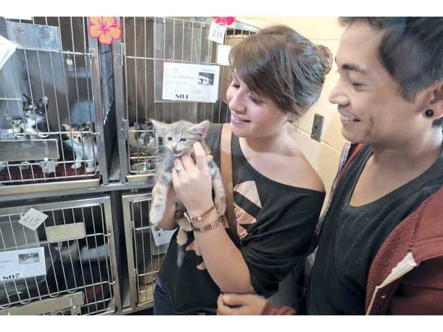 Andrea Mejia, left, of Castaic, and Ryan Yamamoto, of Stevenson Ranch, pick a stray domestic mix kitten at the Cat Days of Summer pet-adoption event at the Los Angeles County Animal Care and Control's Castaic Shelter.