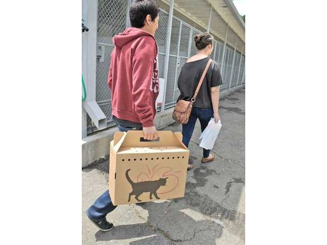 Ryan Yamamoto, left, of Stevenson Ranch, carries a cat carrier after he and Andrea Mejia, of Castaic, adopted a stray domestic mix kitten at the Cat Days of Summer.