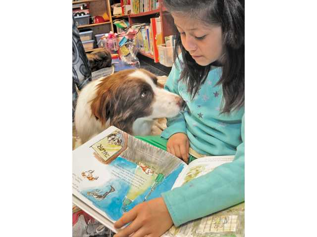 "Elizabeth Quiles, 8, reads to Merced, an 8-year-old Australian shepard, from the book ""Henry the Dog with no Tail."" The Reading Education Assistance Dogs (READ) program is offered at the Valencia Library and the Santa Clarita Community Center."