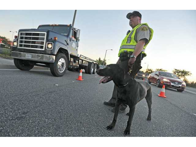 Deputy Jonn Eidem handles Gunner, an alcohol- and marijuana-sniffing labrador at a DUI and driver's license checkpoint on Valencia Boulevard, west of Bouquet Canyon Road, in Valencia on Friday.