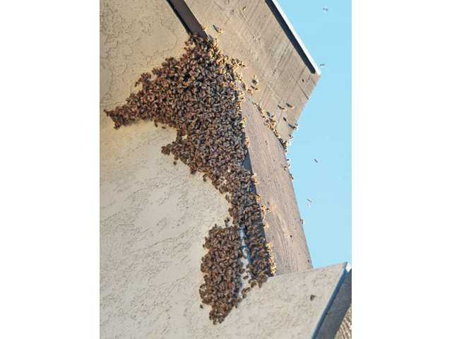A swarm of bees cling to the roof of the U.S. Post Office in Newhall on Tuesday.