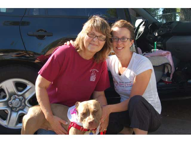 "Michelle Sathe, right, and Kara, her ""Pit Stops"" pit bull ambassador, returned from their national book tour to the Santa Clarita Valley on July 23. Kara was happily reunited with her foster, now adoptive, mother, Kyle Harris, left, of Canyon Country."