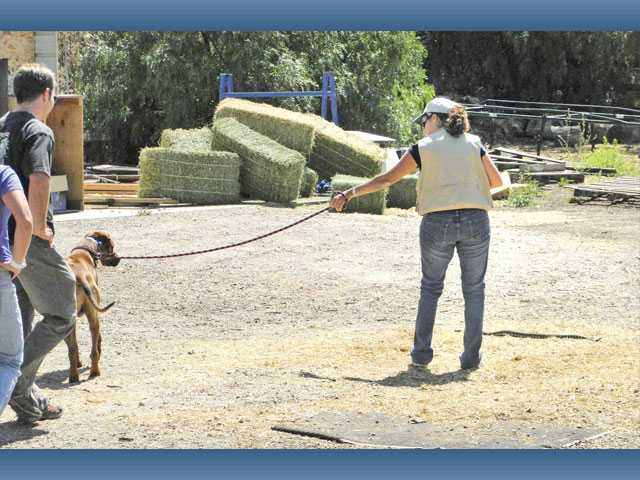 The Rattlesnake Avoidance Training Clinic on Aug. 7 in Castaic will offer a safe, controlled environment in order to train your dog to avoid rattlesnakes, which are prevalent on Santa Clarita Valley hiking trails, and in rural areas.
