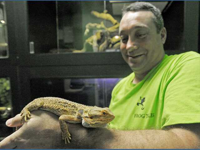 Manager Rod Blair handles Baron, a citrus bearded dragon at Frog Tales in Valencia.