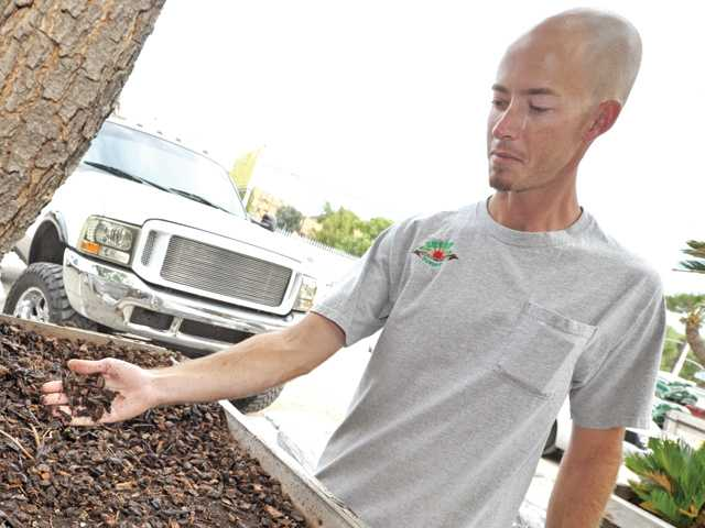 James Green shows a container of redwood mulch at Green Landscape Nursery in Saugus.