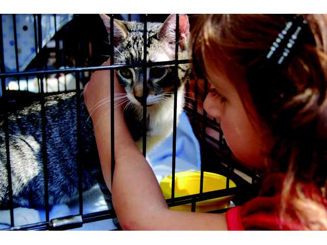 A girl pets an adoptable cat. The 2011 pet fair is at Hart Park on Sunday from 11 a.m. to 4 p.m.