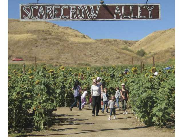 Scarecrow Alley at Lombardi Ranch.