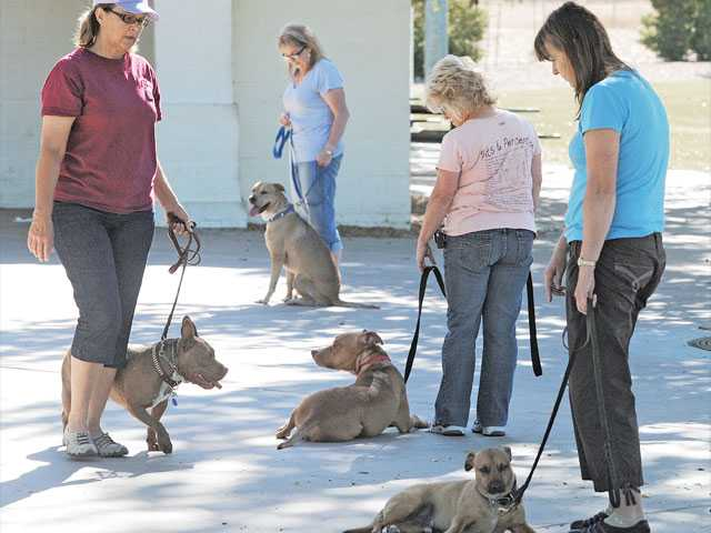 Kyle Harris, left, walks Kara among the other class-mates of the Canine Good Citizen in order to teach calmness around other dogs at Central Park in Saugus on Thursday.