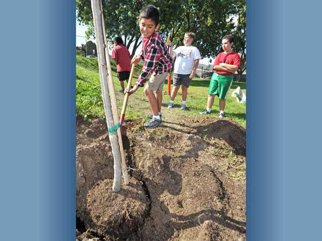 Third-grader Dean Acevedo, 8, shovels dirt as a pair of oak trees are planted at Santa Clarita Elementary School in Saugus on Monday.