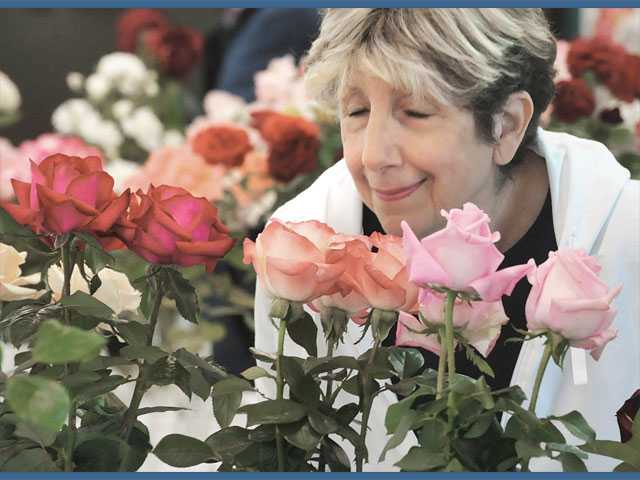 Barbara Oliver of Newhall enjoys the fragrance of some of the 500 variations of roses on display at the 18th annual Rose Show presented by the Santa Clarita Valley Rose Society at Hart Hall at William S. Hart Park in Newhall on Saturday.