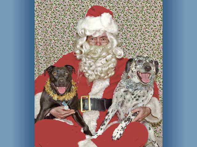 Allan Cameron, a board member of Pet Assistance of Santa Clarita Valley, poses with two dogs during the annual Photos with Santa fundraiser for the organization.