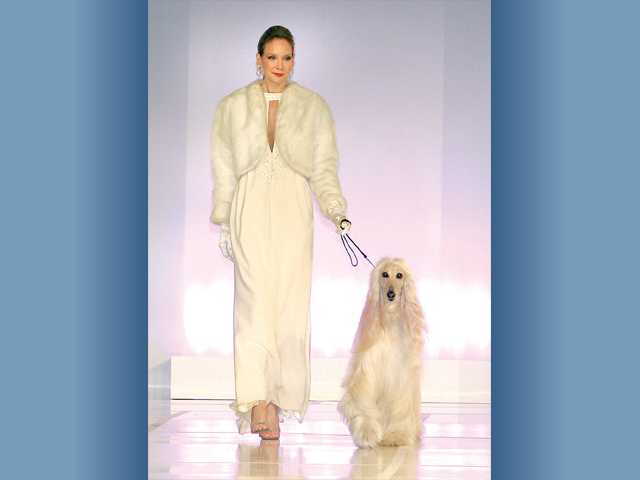 An elegant gown walks the runway worn by a professional model and escorted by an Afghan hound.
