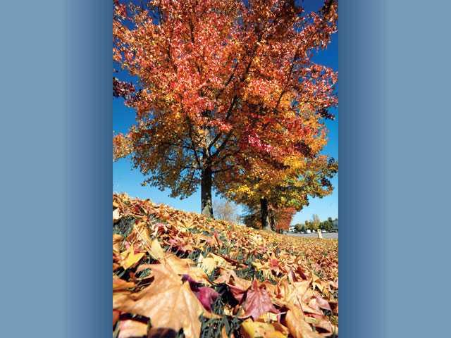 A kaleidoscope of colors