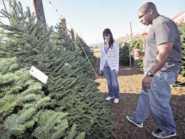 Audra Wagner, left, and Charles Brigance shop for Christmas trees at Nancy's Ranch in Valencia. The Christmas tree ranch is located adjacent to Magic Mountain Parkway and open until dusk for cut-your-own trees.