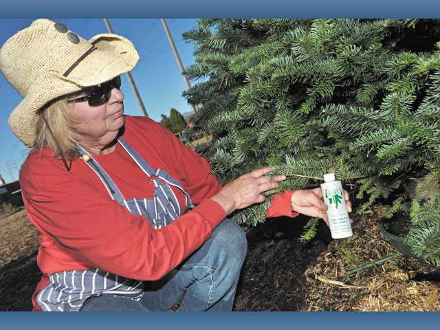 Nancy Roatcap holds a bottle of Christmas tree preservative that helps fresh trees last longer.