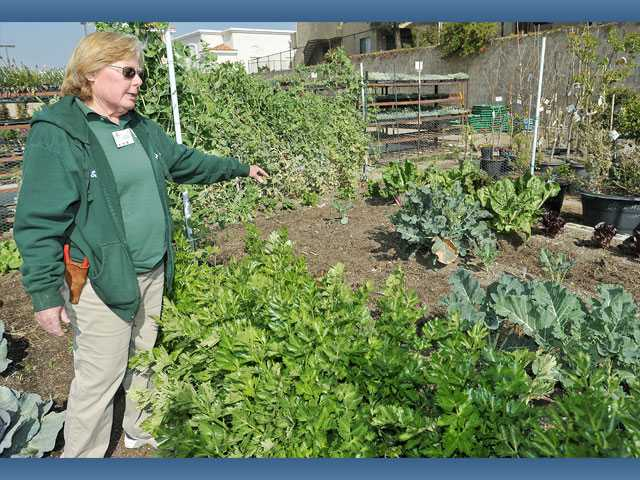 Sandy Cudmore, an advanced, certified nursery professional, stands in the teaching garden at Green Thumb International.