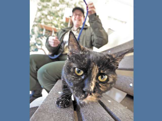 Animal Control Officer Kim Schumann plays with Minka, one of the female domestic short-hair cats, in the cat habitat.