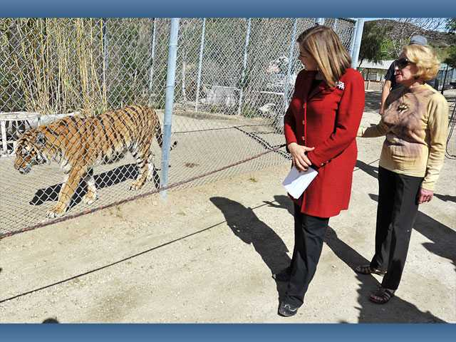 Rep. Loretta Sanchez, D-Garden Grove, and Shambala Preserve president Tippi Hedren visit with tigress Natasha (left) as they tour the Acton wild animal preserve on Monday.