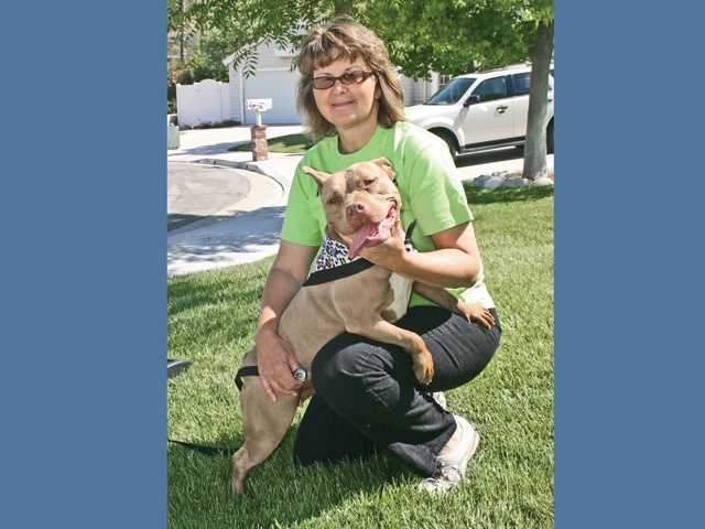Kara, a 4-year-old pit bull, was bitten by a rattlesnake in her Canyon Country backyard on March 5. With quick action by her owner, Kyle Harris, and five days of veterinary care, Kara was able to recover and is back to her happy, healthy self.