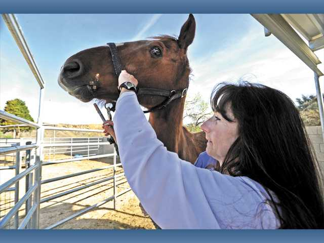 Registered Veterinary Technician Kathy Baxter administers a dose of worm medicine to a horse.