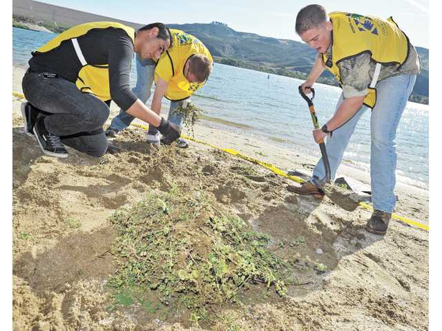 Mormon Missionaries, form left, Eduardo Alvarado, Daniel Reed and Max White dig out weeds from the sand in the north beach section of Castaic Lake.