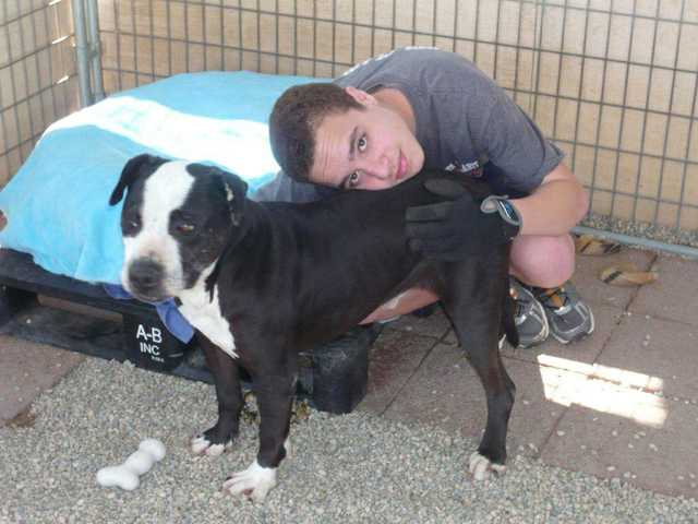 Jimmy Boone befriended Champ, a 10-year-old pit bull rescued by The Brittany Foundation an hour before he was set to be euthanized at an L.A. County shelter.