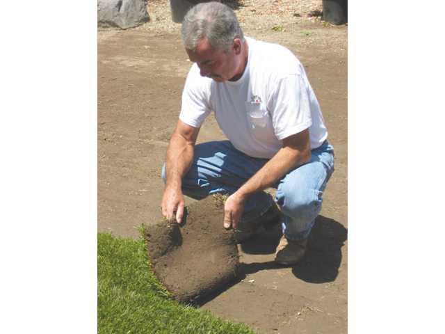 Richard Green, of Green Landscape Nursery displays tall fescue sod. This type of sod is perfect for the harsh climate of the Santa Clarita Valley.