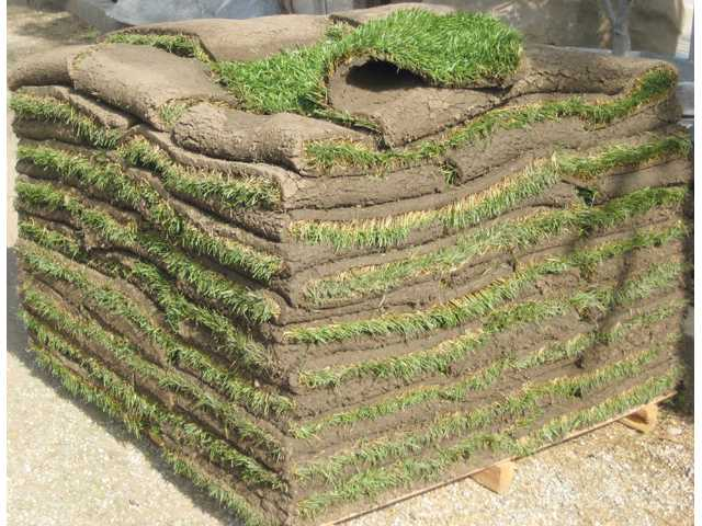 A pallet of tall fescue sod rests at Green Landscape Nursery. The pallet holds 500 square feet of sod, cut into 5-square-foot sections, which sell for $2.95 each.