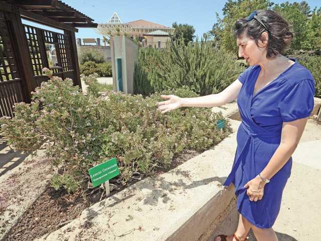 Stephanie Anagnoson, CLWA water conservation program coordinator, points out a lemon geranium.