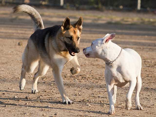 Bridgette, left, plays with Roxie, a pit bull mix, in Central Bark's area for all dogs.