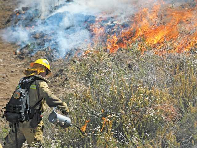A firefighter uses a drip torch to set a controlled burn on a hillside during a training drill at Pitchess Detention Center in Castaic on Thursday.