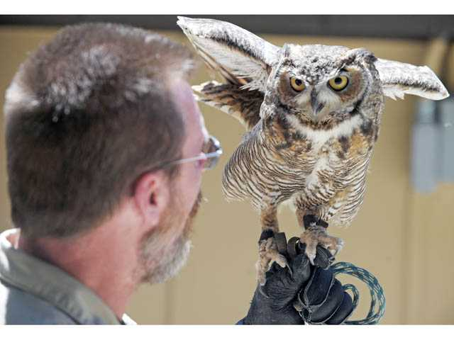 Dave Stives with Orion, a Great Horned Owl at the Placerita Canyon Nature Center.