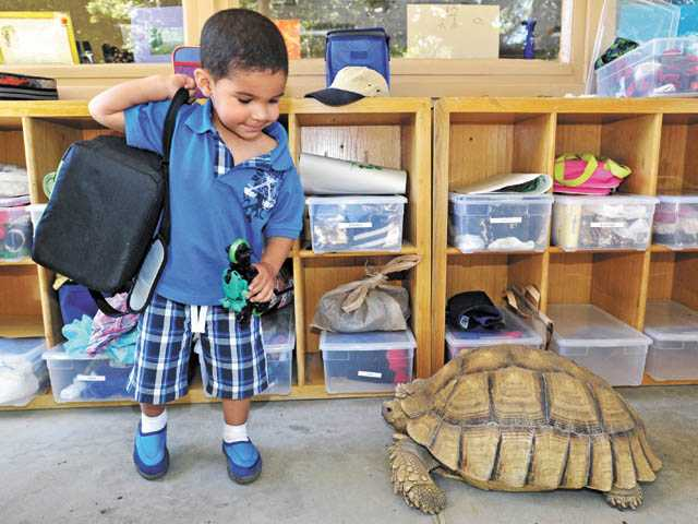 Aden Joyner, 3, shares a moment with Ben, a tortoise, at A Little Patch of Earth preschool in Newhall on Thursday.