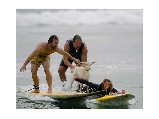 Dana McGregor, from Pismo Beach, far left, surfs with his pet goat Pismo and pals Mark and Debbie Gale, of San Clemente in San Clemente.