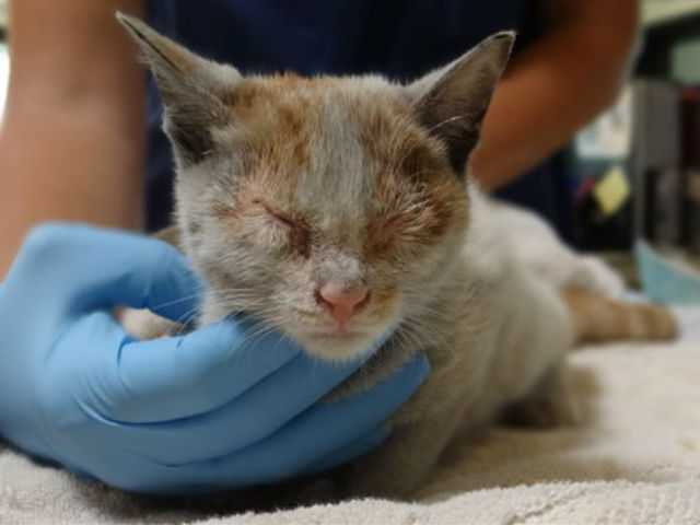 A kitten that survived an ocean voyage from Shanghai to Los Angeles locked in a shipping container without food or water.