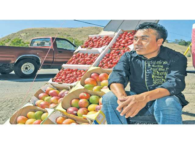 Fruit vender Carlos Gonzales sells strawberries and mangos to passing motorists, Click here for more photos.