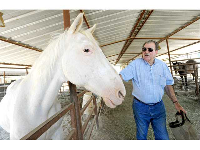 Jack Lilley, who owns and operates Movin on Livestock, spends a moment with Blanco in the company's barn in Canyon Country on Tuesday.