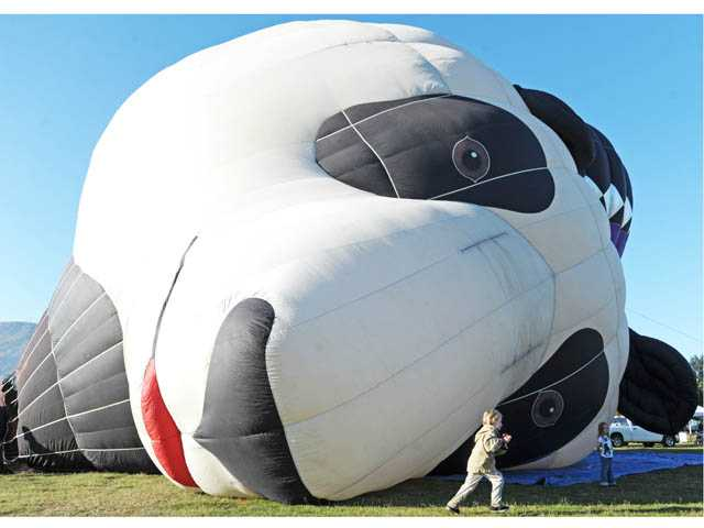 Jackson Todd, 6, dashes across the face of the Panda-Air-Bear as the 67-foot hot air balloon is inflated at the Citrus Classic Balloon Festival in Santa Paula on Saturday morning.