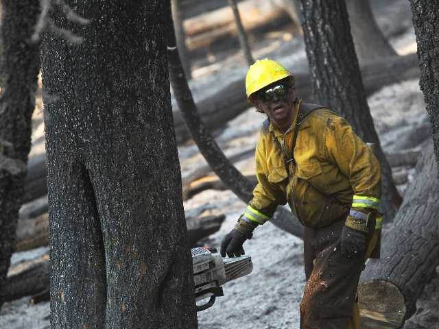 "Richard ""Bo"" Bolton, a timber feller from Burney, Calif., cuts down trees burned in the Reading Fire along Highway 89 in Lassen National Park on Friday."