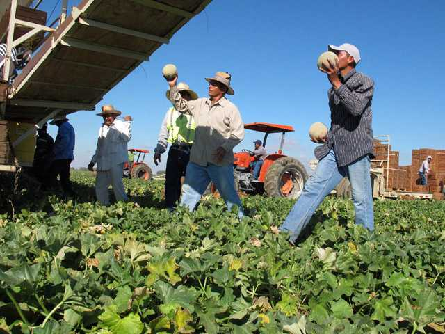 State weighs tougher heat rules for farmworkers