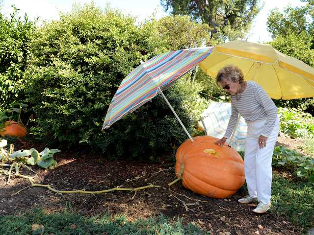 Calif. woman, 93, finds prize pumpkins smashed