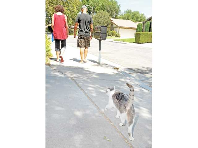 Puck follows A.J. Salonius-Sherrod, left, and Michael Salonius as they walk their dogs