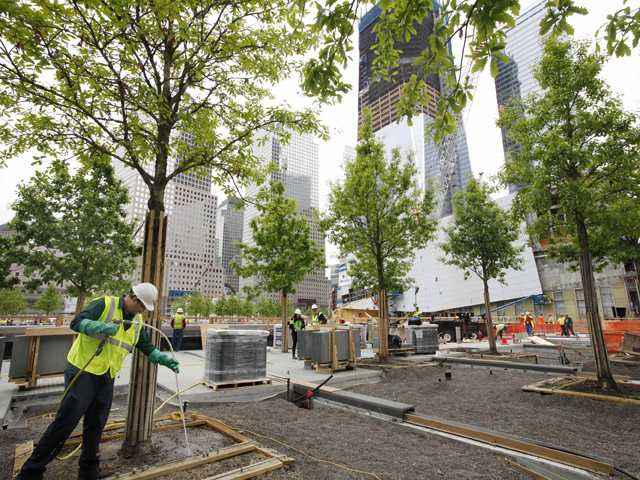 In this May 13, 2011, photo, arborist Jeremy DeSimone, left, sprays fertilizer on a swamp white oak at the National September 11 Memorial in New York.