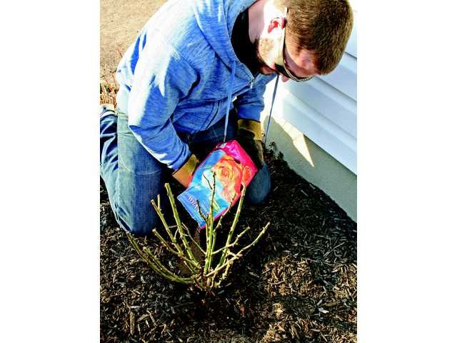Slow release fertilizers help produce superior plant growth.