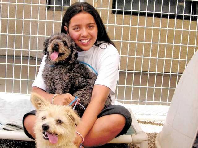 Julia Cammarata, 12, of Valencia, poses with poodle Yankee, center, and Scruffy, below, at The Brittany Foundation. The foundation will have a fundraiser Sept. 29.